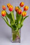 Piękni pomarańczowej czerwieni tulipany na popielatym tle Zdjęcie Stock