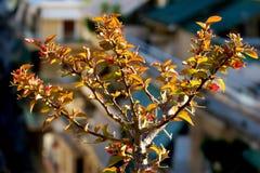 Piękni potomstwa kapują z zieleń liśćmi i mała menchia kwitnie obrazy stock
