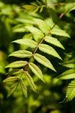 Piękni potomstwo zieleni liście rośliny zakończenie zdjęcia stock