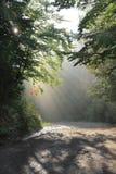 Piękni promienie słońce błyszczą przez ulistnienia fotografia royalty free