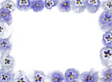 Piękni purpurowi pansies układali w prostokącie na whit, obraz stock