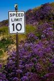Piękni purpurowi wildflowers otacza prędkości ograniczenie podpisują zdjęcia stock