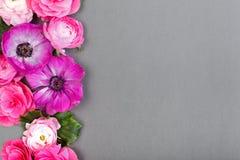 Piękni różani i biali kwiaty na szarym backgraund Pastelowy kolor Kartka z pozdrowieniami dla walentynek lub kobieta dnia kopia obraz royalty free