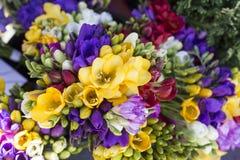 Piękni różnorodni kolorowi wiosna kwiaty zdjęcie stock