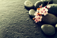 Piękni różowi zdrojów kwiaty na zdrojów Gorących kamieniach na wodzie Moczą Backgr Obrazy Royalty Free