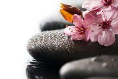 Piękni różowi zdrojów kwiaty na zdrojów Gorących kamieniach na wodzie Moczą Backgr Zdjęcia Stock