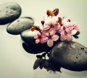 Piękni różowi zdrojów kwiaty na zdrojów Gorących kamieniach na wodzie Moczą Backgr Fotografia Royalty Free