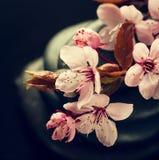 Piękni różowi zdrojów kwiaty na zdrojów Gorących kamieniach na wodzie Moczą Backgr Zdjęcie Stock