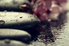 Piękni różowi zdrojów kwiaty na zdrojów Gorących kamieniach na wodzie Moczą Backgr Fotografia Stock