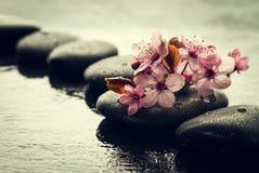 Piękni różowi zdrojów kwiaty na zdrojów Gorących kamieniach na wodzie Moczą Backgr Obraz Royalty Free