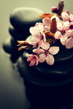 Piękni różowi zdrojów kwiaty na zdrojów Gorących kamieniach na wodzie Moczą Backgr Zdjęcia Royalty Free