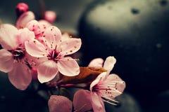 Piękni różowi zdrojów kwiaty na zdrojów Gorących kamieniach na wodzie Moczą Backgr Zdjęcie Royalty Free