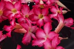 Piękni romantyczni czerwoni kwiaty na nawadniają powierzchnię dla tła Obrazy Stock