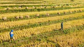 Piękni ryż tarasy przy małym przysiółkiem toczni ryżowi tarasy zdjęcie royalty free