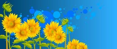 piękni słoneczniki Zdjęcia Stock