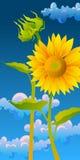 piękni słoneczniki Fotografia Royalty Free