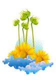 piękni słoneczniki Zdjęcia Royalty Free