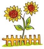 piękni słoneczniki Zdjęcie Stock