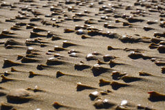 Piękni seashells na plaży przy zmierzchu tłem fotografia stock