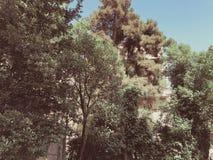 Piękni sosnowi i okwitnięcie drzewa w parku Widok od dna wierzchołek zdjęcie stock