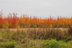 Piękni stubarwni drzewa w polu w jesieni Jesień dzień Wrzesień Zdjęcie Stock