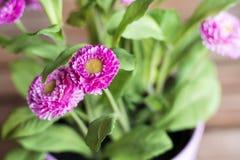 Piękni sztuczni różowi kwiaty w menchia garnku Zdjęcia Stock