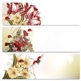 Piękni tła ustawiający z kwiatami Zdjęcia Royalty Free