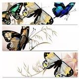 Piękni tła ustawiający z motylami Zdjęcia Royalty Free