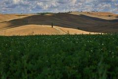 Piękni Toscana pola w San Quirico d «Orcia zdjęcie stock