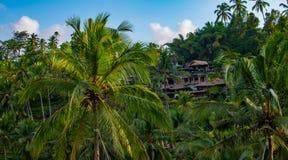 Piękni tropikalni drzewka palmowe przy niebem blisko azjata domu zdjęcie royalty free