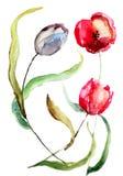 Piękni tulipanów kwiaty Fotografia Royalty Free