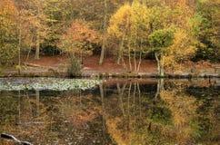 Piękni wibrujący jesień lasu reflecions w spokojnym jeziorze nawadniają Zdjęcie Royalty Free