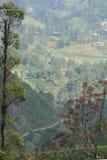 Pi?kni widoki herbaciane plantacje Sri Lanka obrazy stock