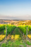 Piękni winnicy na wzgórzach pokojowy Tuscany, Włochy Obrazy Royalty Free