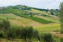 Piękni wzgórza w prowinci Teramo fotografia royalty free