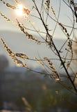 Piękni złoci sprigs Zdjęcie Stock