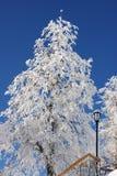 piękni zakrywający śnieżni drzewa Obrazy Stock