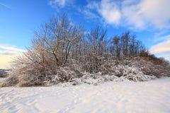 piękni zakrywający śnieżni drzewa Zdjęcie Royalty Free