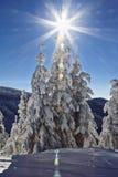 piękni zakrywający śnieżni drzewa Zdjęcie Stock