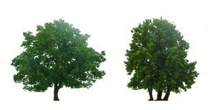 piękni zieleni drzewa obrazy royalty free