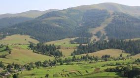 Piękni zieleni wzgórza i iglasty las w Karpackich górach, Ukraina zdjęcie wideo