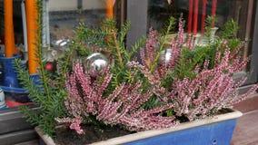 Pięknie dekorujący okno z lawendą na bożych narodzeniach wprowadzać na rynek w Niemcy, Nuremberg zbiory wideo