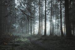 Pięknie markotna lasowa ścieżka z słońcem promienieje przybycie przez drzew na mglistym zima dniu fotografia royalty free