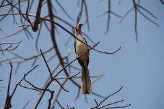 Pięknie widok ptaki przy ruaha parkiem narodowym fotografia stock