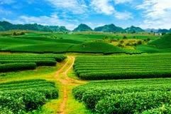 Piękno świeża zielona herbata Zdjęcia Stock