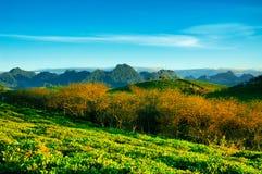 Piękno świeża zielona herbata Obrazy Royalty Free