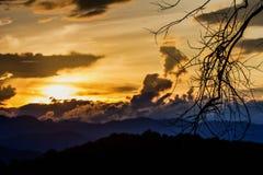 Piękno cienia gałąź z niebem przy zmierzchu tłem Obrazy Royalty Free