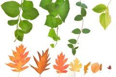 Piękno jesień liście fotografia stock