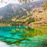 Piękno jesień w jiuzhaigou zbliżeniu Fotografia Royalty Free