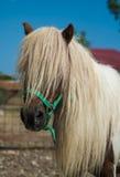 piękno koń Obrazy Stock